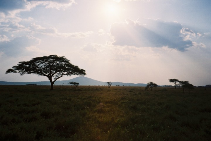 Giraffe in the homeland: The Serengeti, Kilimanjaro and final thoughts on volunteering overseas – Part 2/2