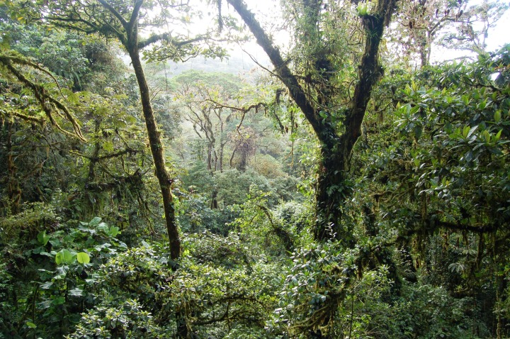 La Pura Vida! Zip lining through the jungle in CostaRica