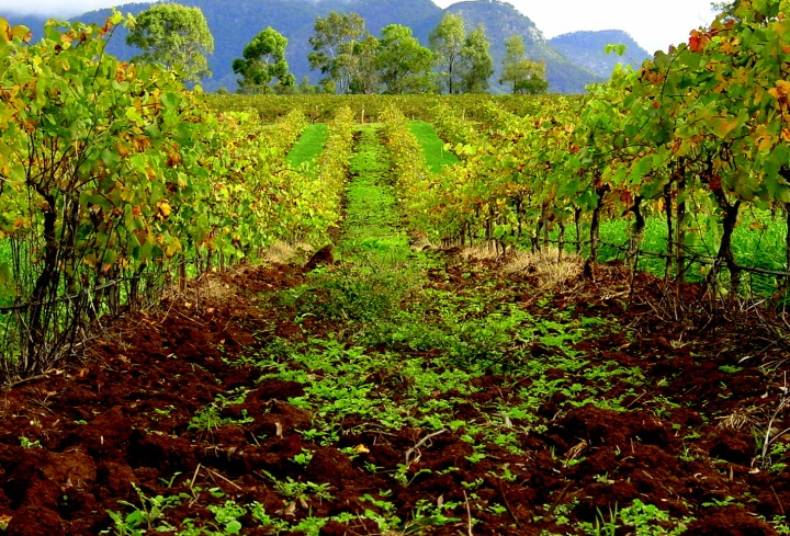 Hunter Valley Wine
